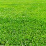 投資の格言「隣の芝生はよく見える」とは?